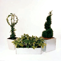Planting ornamental trees and shrubs in containers allows you to vary